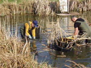 1. April 2017 Reinigungsaktion des Dorfweihers in Dietersdorf (TK) - Im Wasser