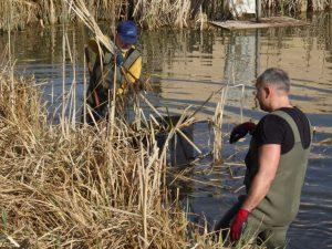 1. April 2017 Reinigungsaktion des Dorfweihers in Dietersdorf (TK) - Harte Arbeit