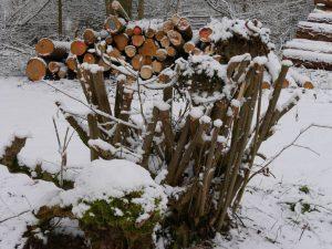 18.02.2018 Winter Impressionen Dietersdorf (RPS) - Kunstweg