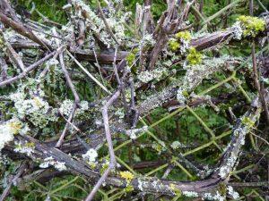 Unterholz mit Moos (RPS)