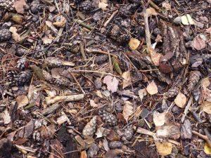 Waldboden (RPS)