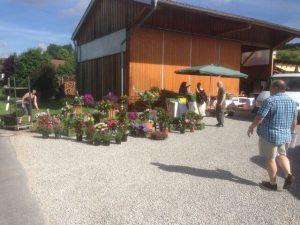 2013 Dorffest Dietersdorf - Blumen