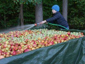 2018 - Most-Saison - Apfel waschen