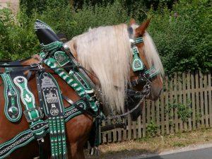 06.07.2019 - Kärwa Dietersdorf (RPS) - Pferde
